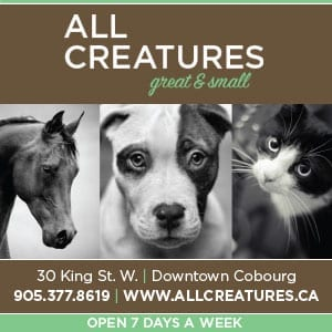 all creatures great and small, all creatures, pets, pet store, web banner, digital ad, advertisement, shopping cobourg, cobourg, downtown cobourg, shopping, cobourg dbia, cobourg tourism